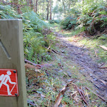 GWN arrow post near the northern Mooney Mooney Creek campsite (54008)