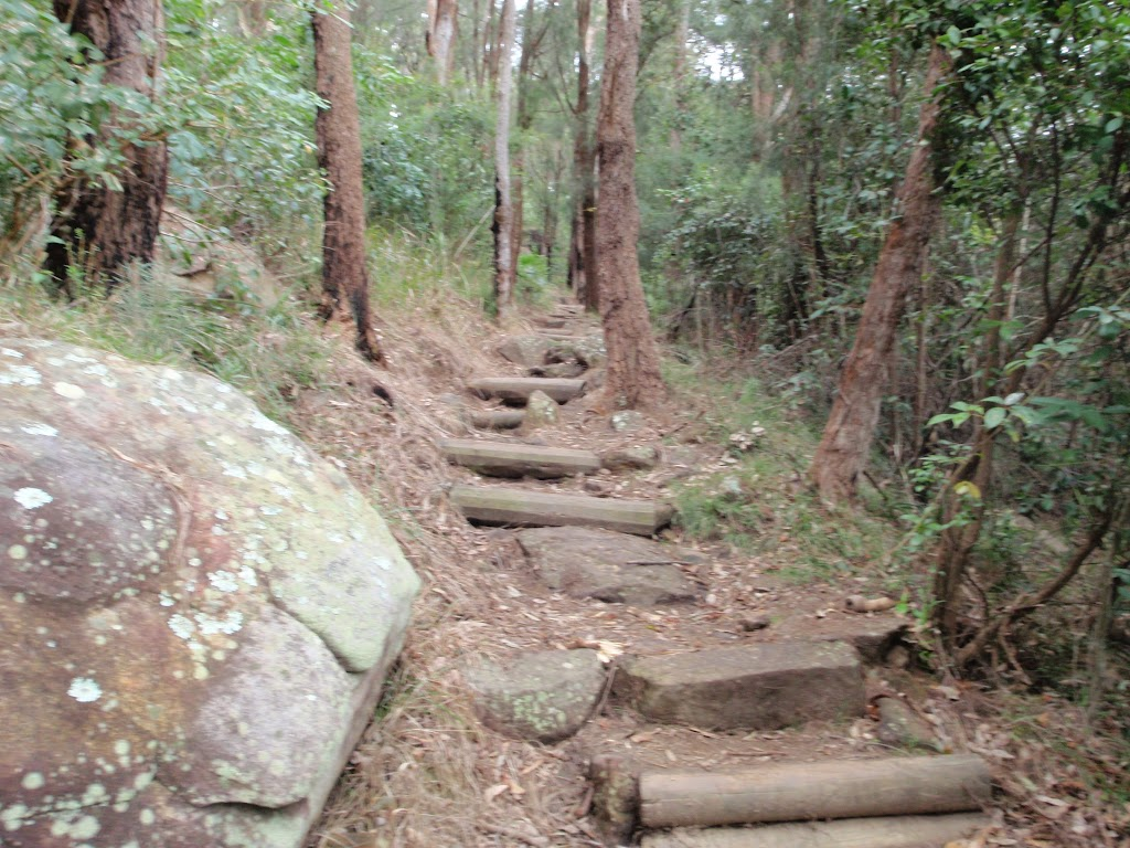 Near the bottom of Patonga Track