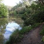 along the Lane Cove river
