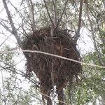 Birds Nest near Deburghs Bridge (54719)