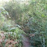 Track through ferns Riverside walk