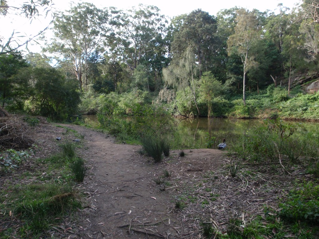 Riverside walk Lane Cove (54908)