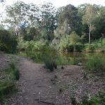 Riverside walk Lane Cove (54908)