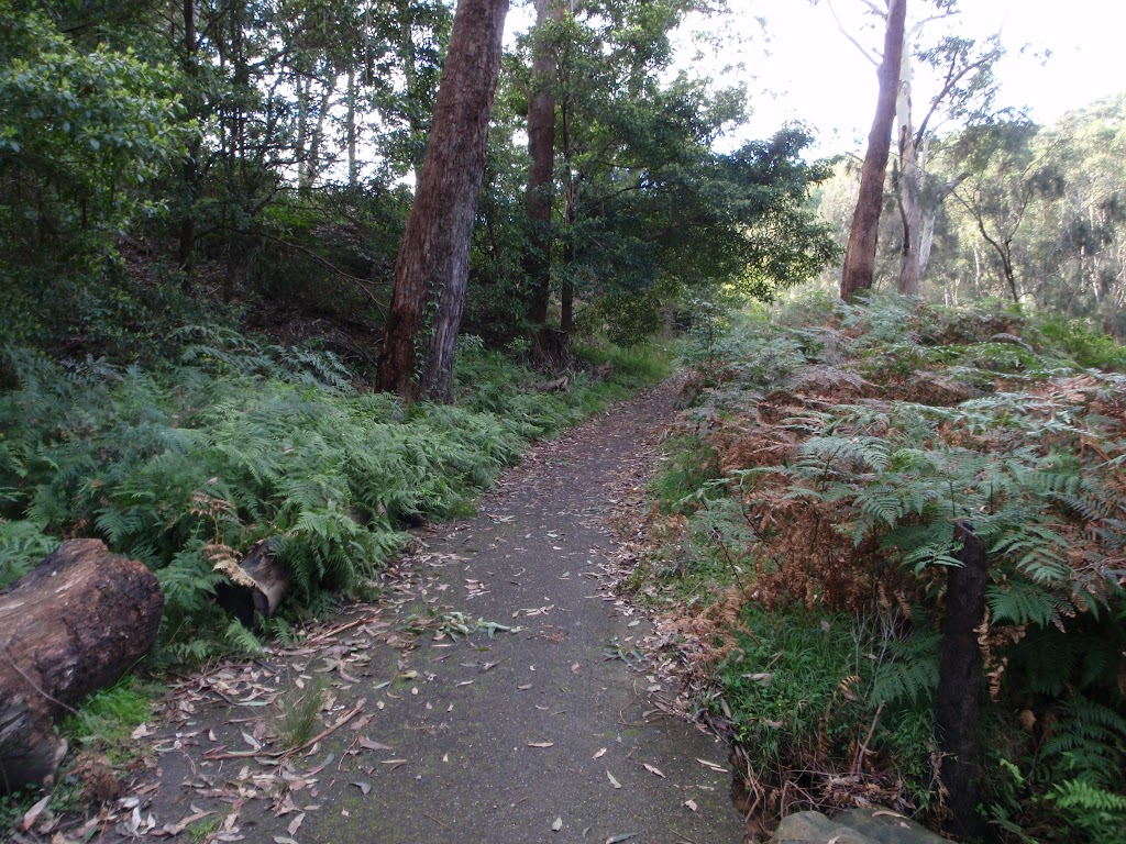 Track along Lane Cove River (54929)