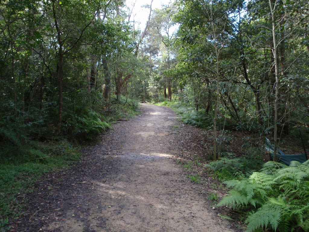Blackbutt Ck Track
