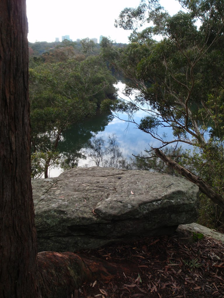 View of Lane Cove River from Upper Track