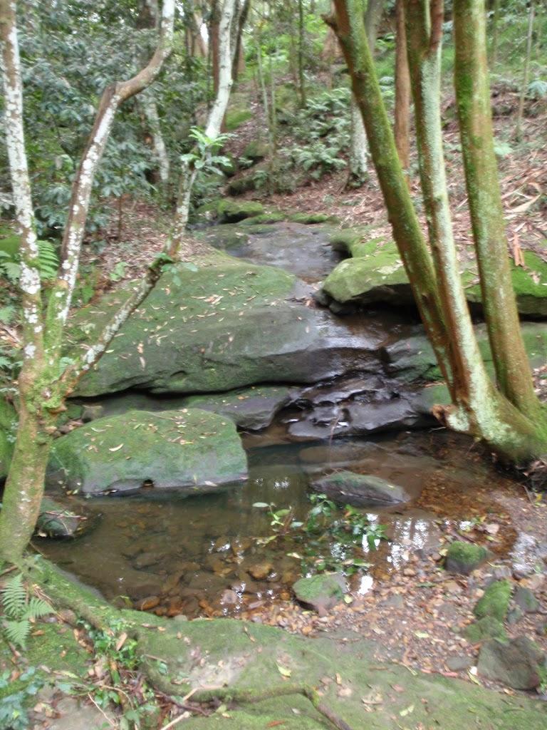 Rock pool on Ferndale Loop