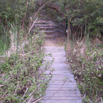On the wetter sections there is often boardwalk