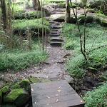 Board walk over creek (56231)