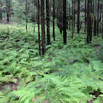 Environment north of Rosemead Park