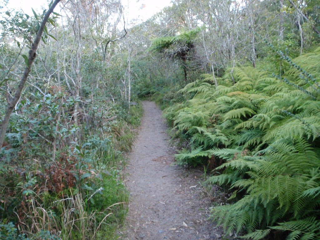 Track on western side of Bradleys Head (57632)