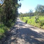 Cherry lane (58469)