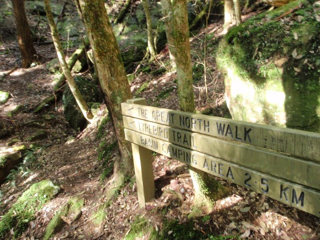 Wollombi creek Gully track