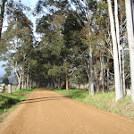 scattered gum trees lining the road (60096)