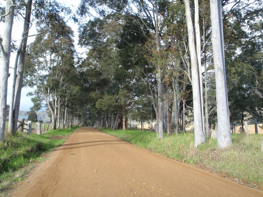 Gums lineing the Congewai Valley Rd (60099)