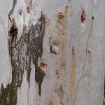 Bark (60413)