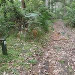 Blue Gum arrow post beside the trail (60932)