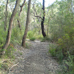 Bush in Berowra Creek valley (6100)