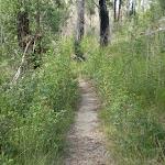 Walking alongside the ridge below Westleigh (6151)