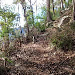 Great North Walk bushtrack