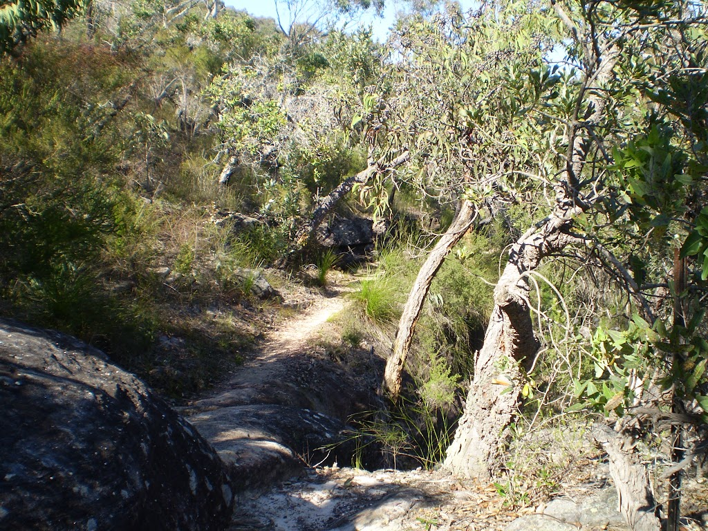Track through Galston Gorge