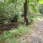 Creek beside Great North walk