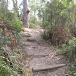 Steps in the Berowra Creek valley