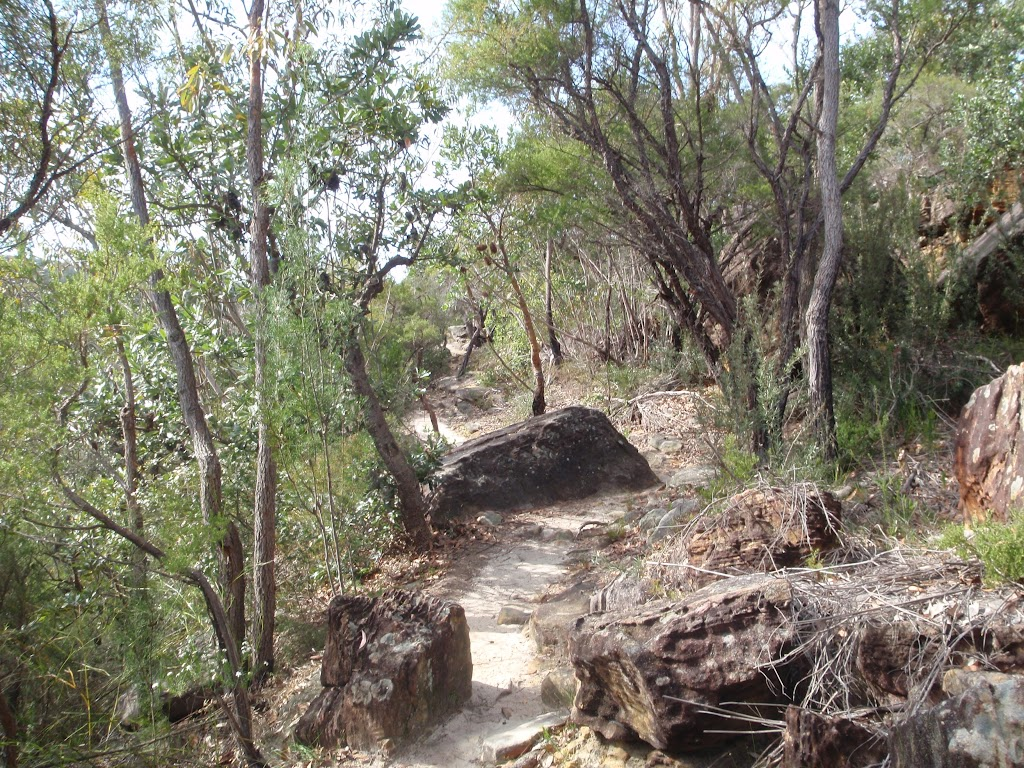 great north walk bushtrack (64496)