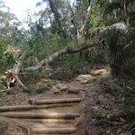 Track up from Berowra Creek