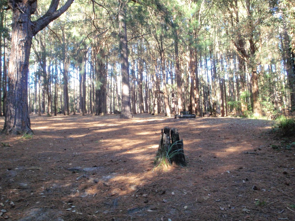 The Pines Forest picnic area