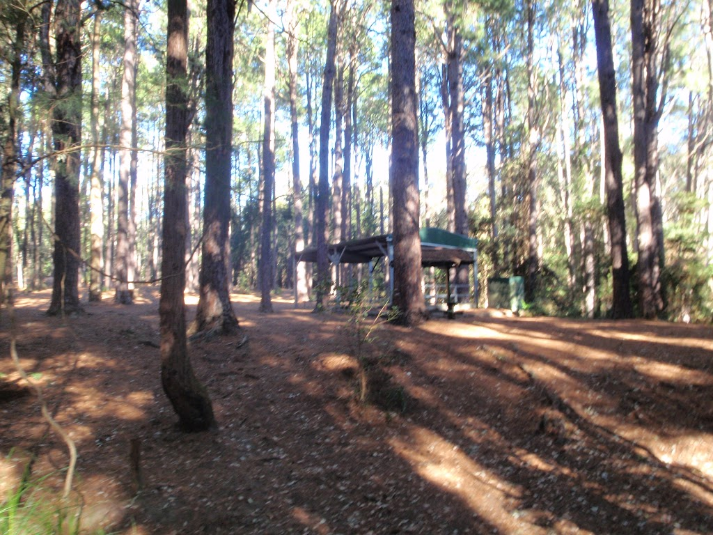 Pines picnic area in the Watagans
