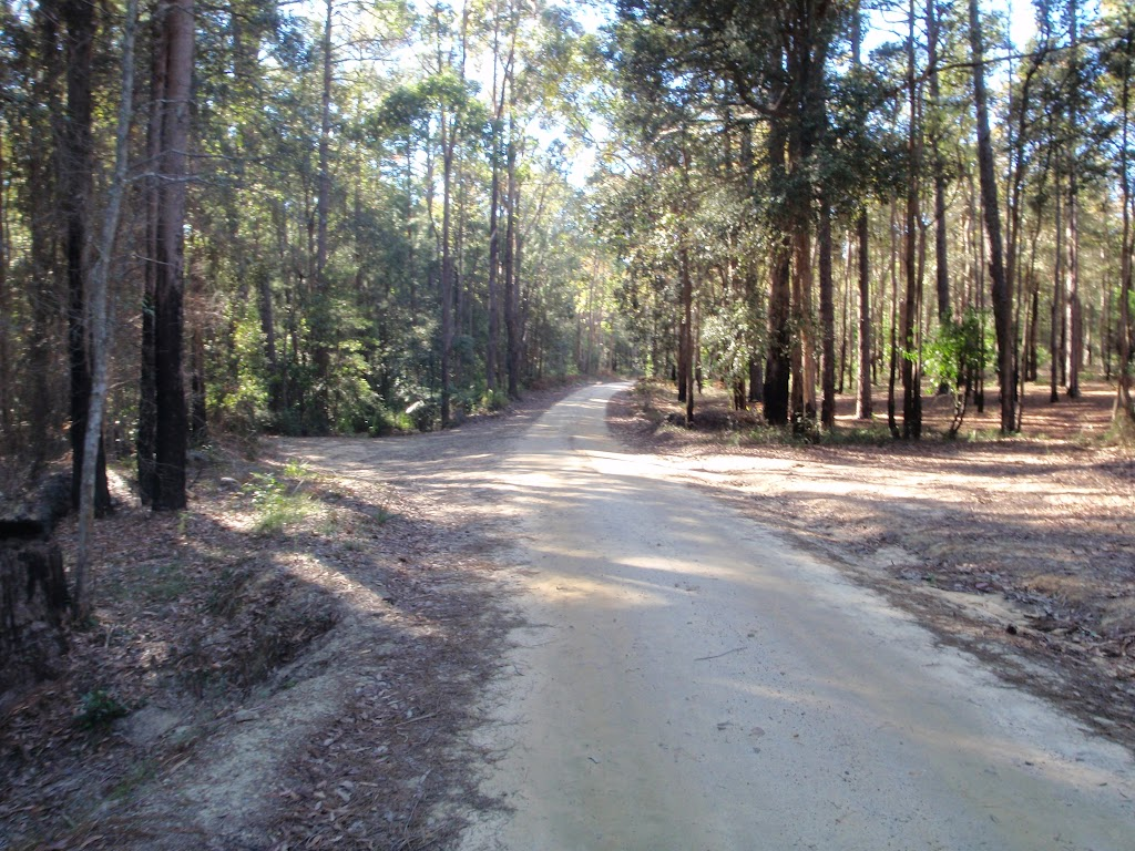 Palmers Rd in the Watagans (65051)