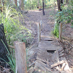 Old broken timber bridge on the track towards Abbotts Falls in the Watagans (65156)