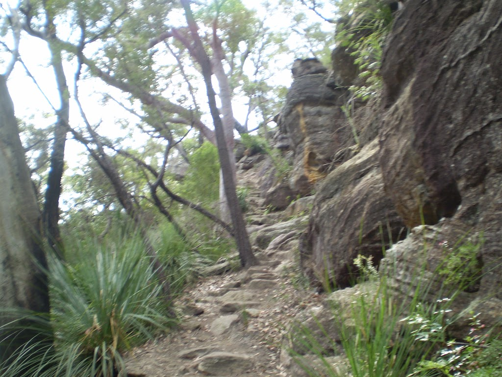 Climbing up from Berowra Waters (6526)