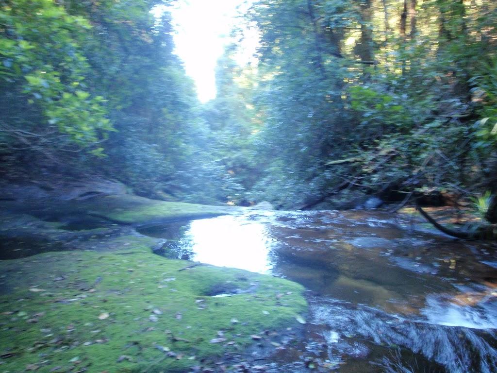Dora Creek near Abbotts Falls