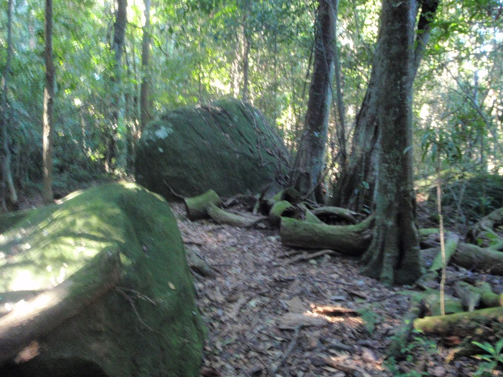 Moss covered boulders (65354)