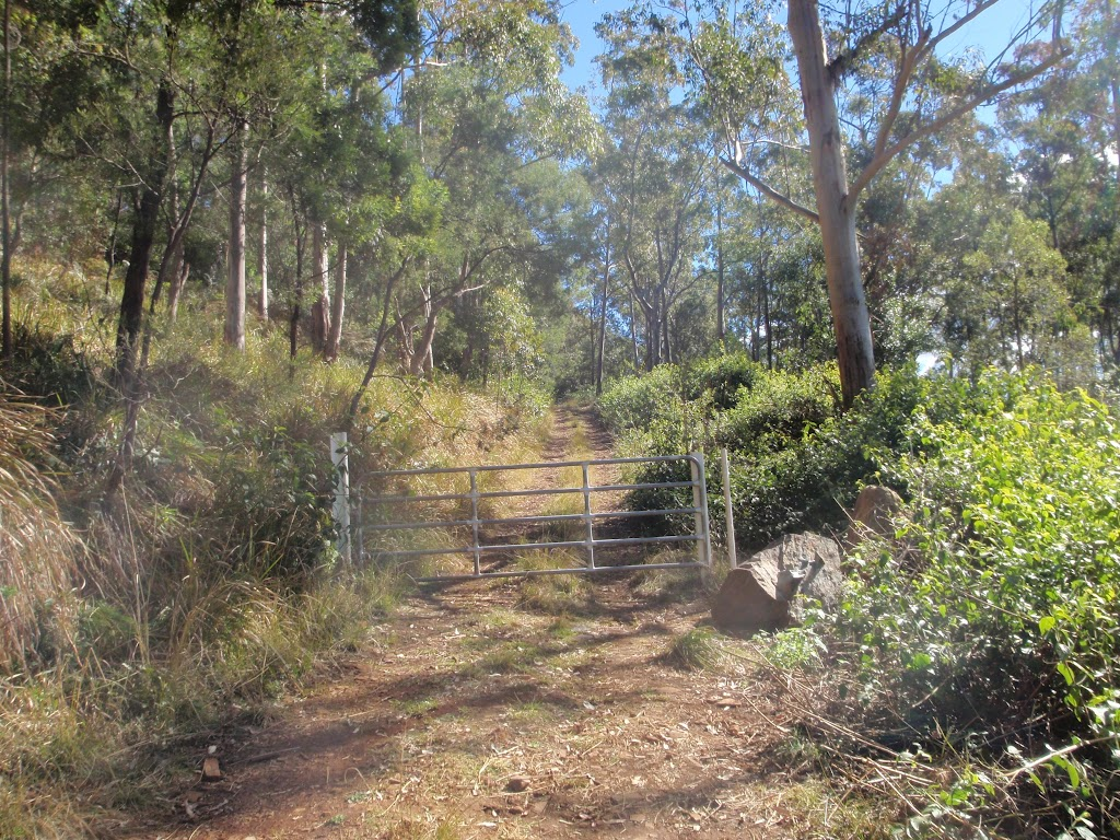 path up Mt Warramalong
