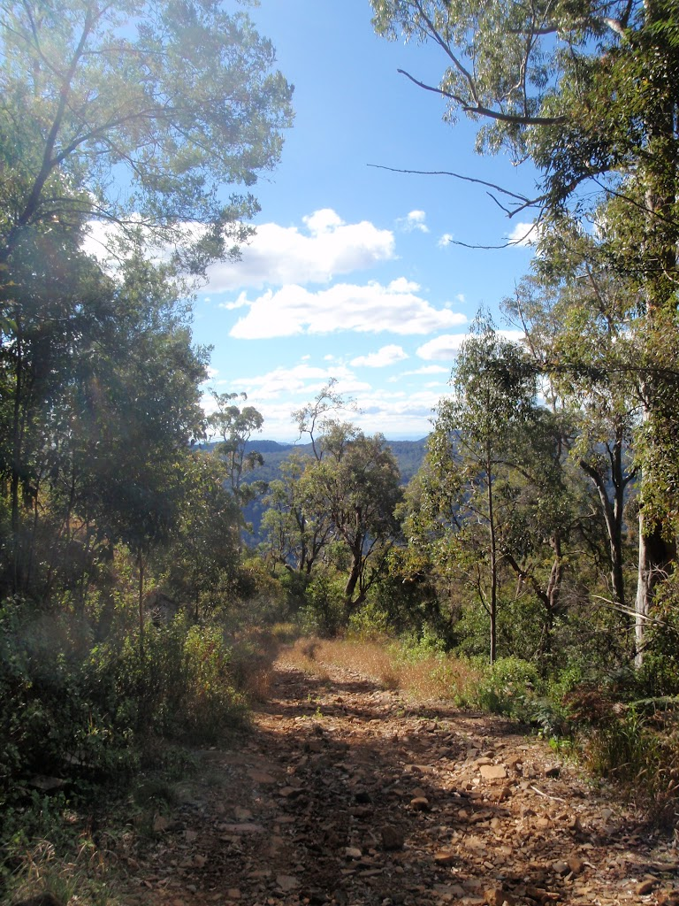 view from path up Mt Warramalong