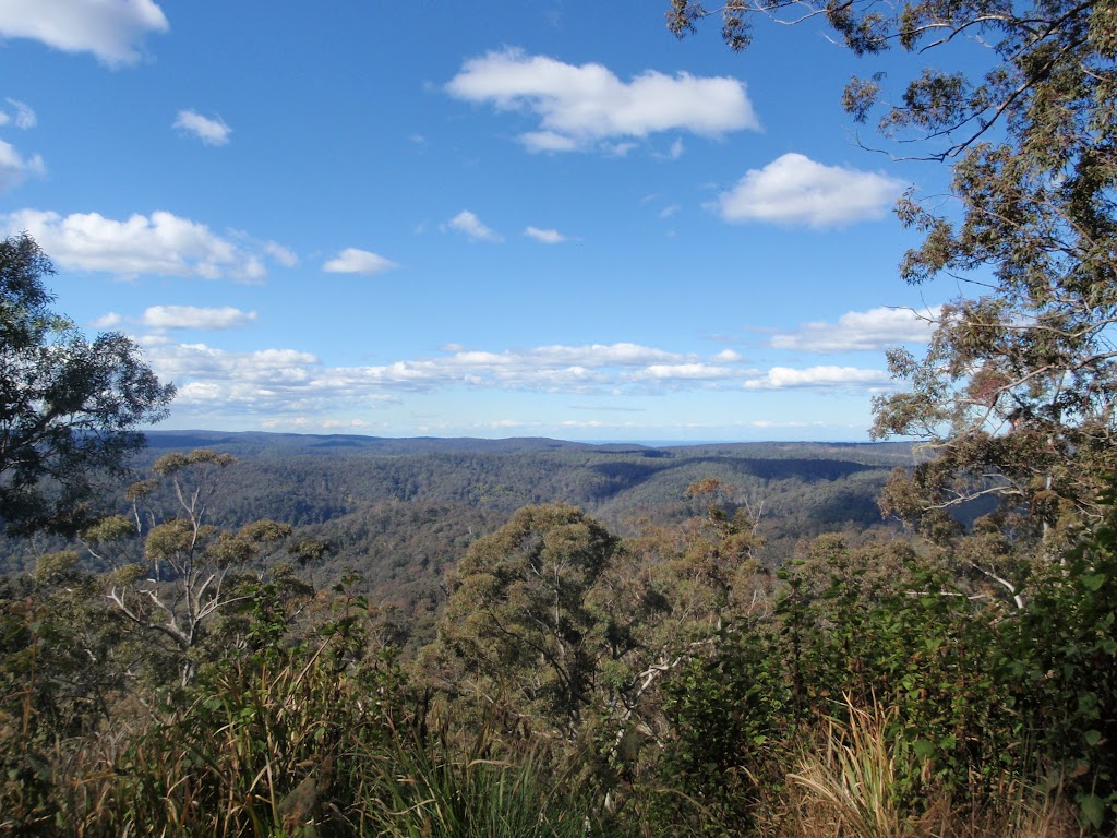 Looking through the trees, east of Mt Warrawolong