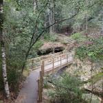 Timber bridge near Boarding House Dam in the Watagans (65952)