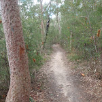Walking track east of Fairylands