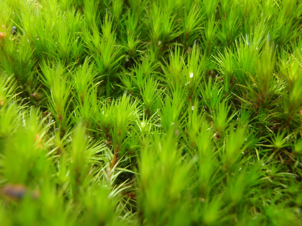 Moss growing in Fairylands