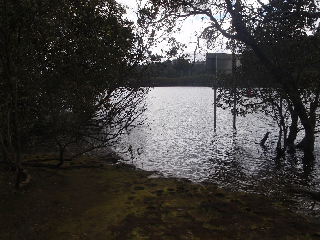 Lane Cove River banks (68421)