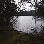 Lane Cove River banks