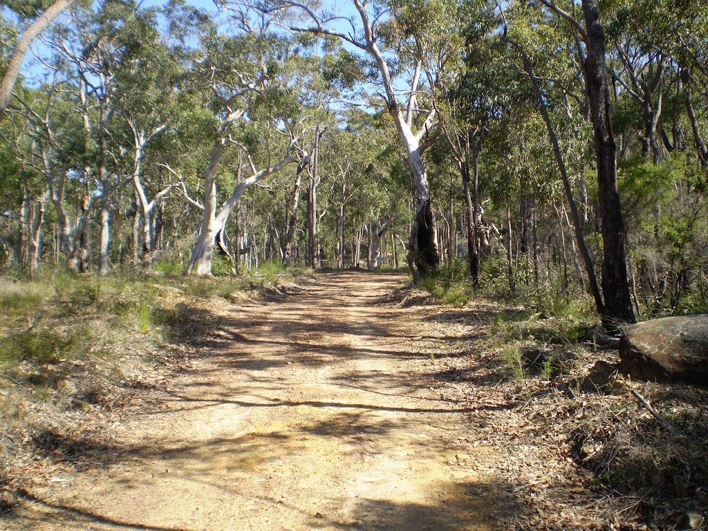 Servicetrail up to Tunks Ridge Reserve