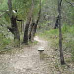 Track to Berowra Waters