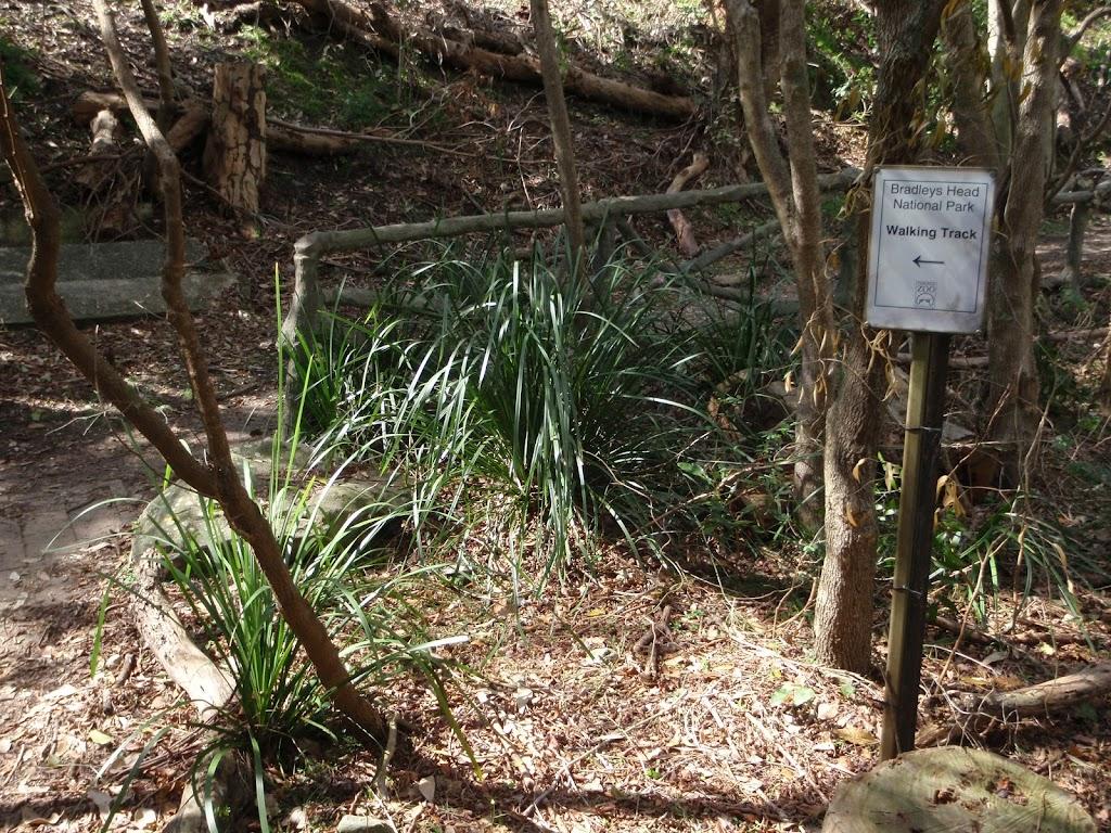 Bushtrack beteen Zoo and Bradleys Head