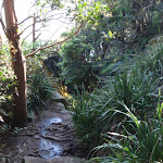 Manly Scenic Walkway (70321)
