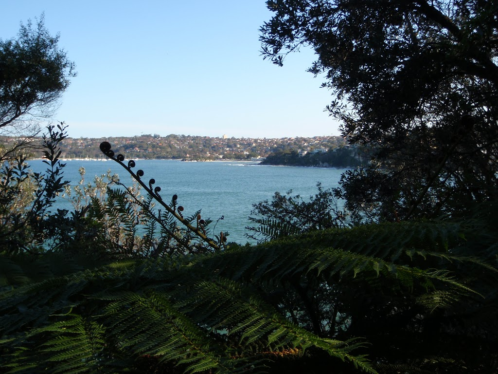 View from Manly Scenic Walk (70363)