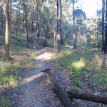 Track up to Hornsby